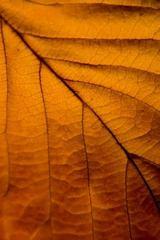 autumn-gold.jpg