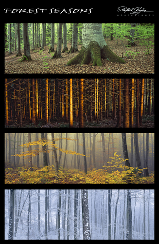 forest_seasons.jpg